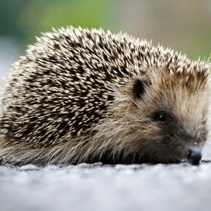 Master the Hedgehog Concept